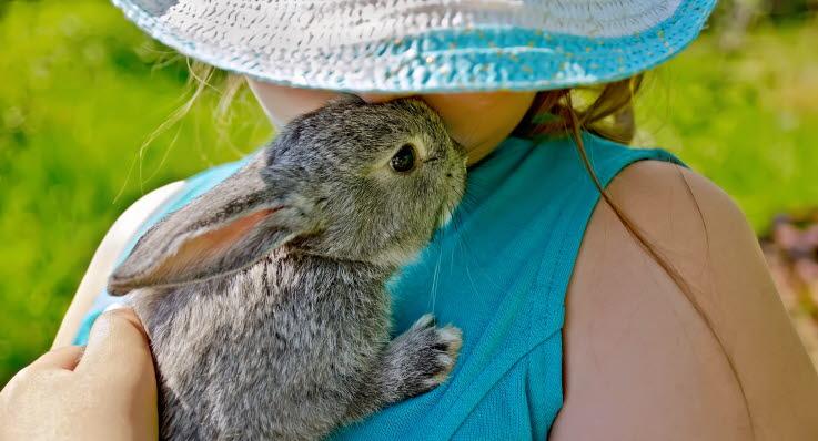 hur mycket äter en kanin