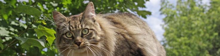 Katt sitter på staket.
