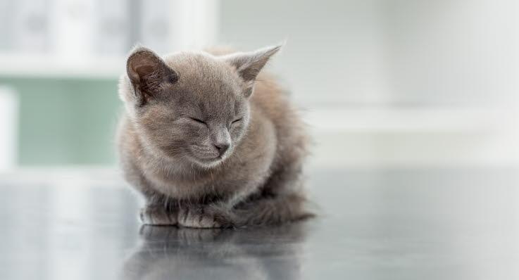 när börjar kattungar äta kattmat