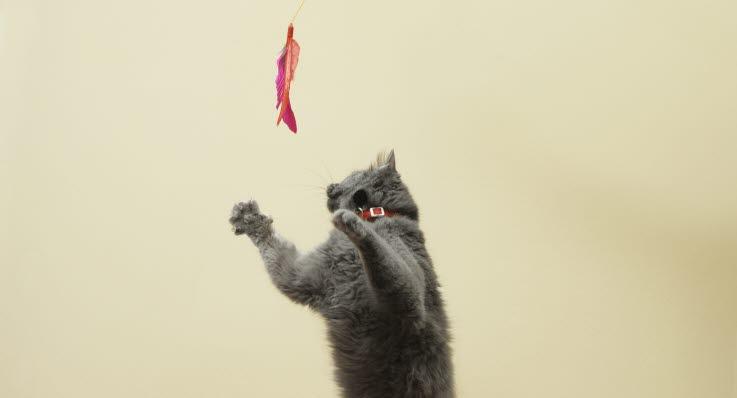 Varför rusar katten runt i bostaden  - Agria Djurförsäkring 6f939b178845a