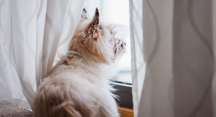 träna hunden att vara ensam