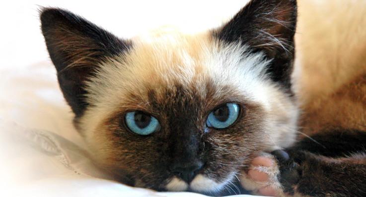 agria kattförsäkring