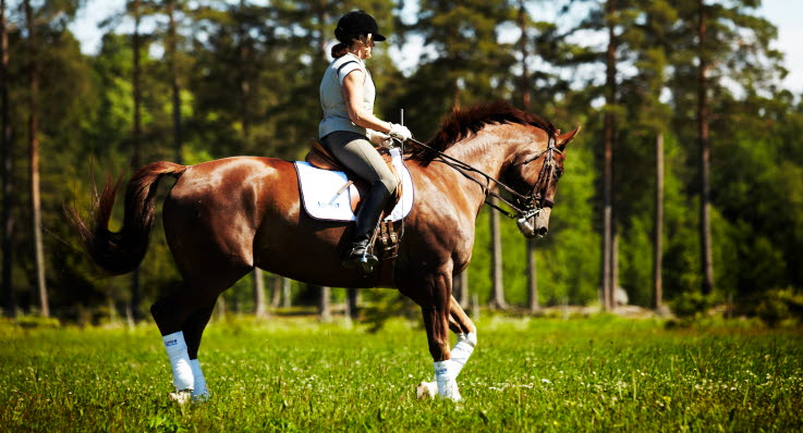 Häst stel i bakbenen
