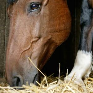 hur länge är hästar dräktiga
