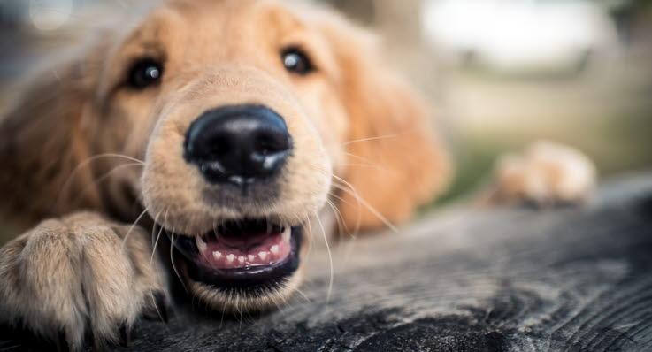 Allt dyrare att forsakra hunden