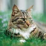 katten spyr upp osmält mat