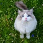 Tjej gråter om katter på dejtingsajt