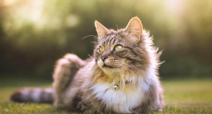 hur ofta ska katten avmaskas