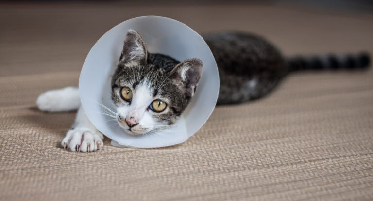 Kastrera katt? Agria Djurförsäkring