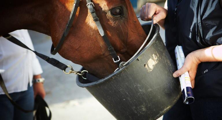 kraftfoder till häst