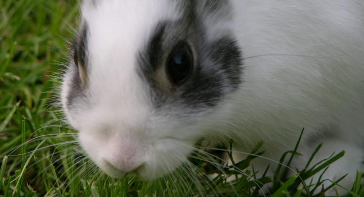 vad gillar kaniner att äta